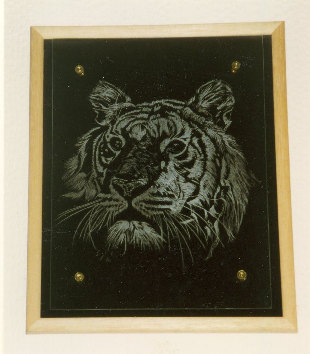 A Hand engraved tiger on a piece flat glass and mounted above a black velvet background.